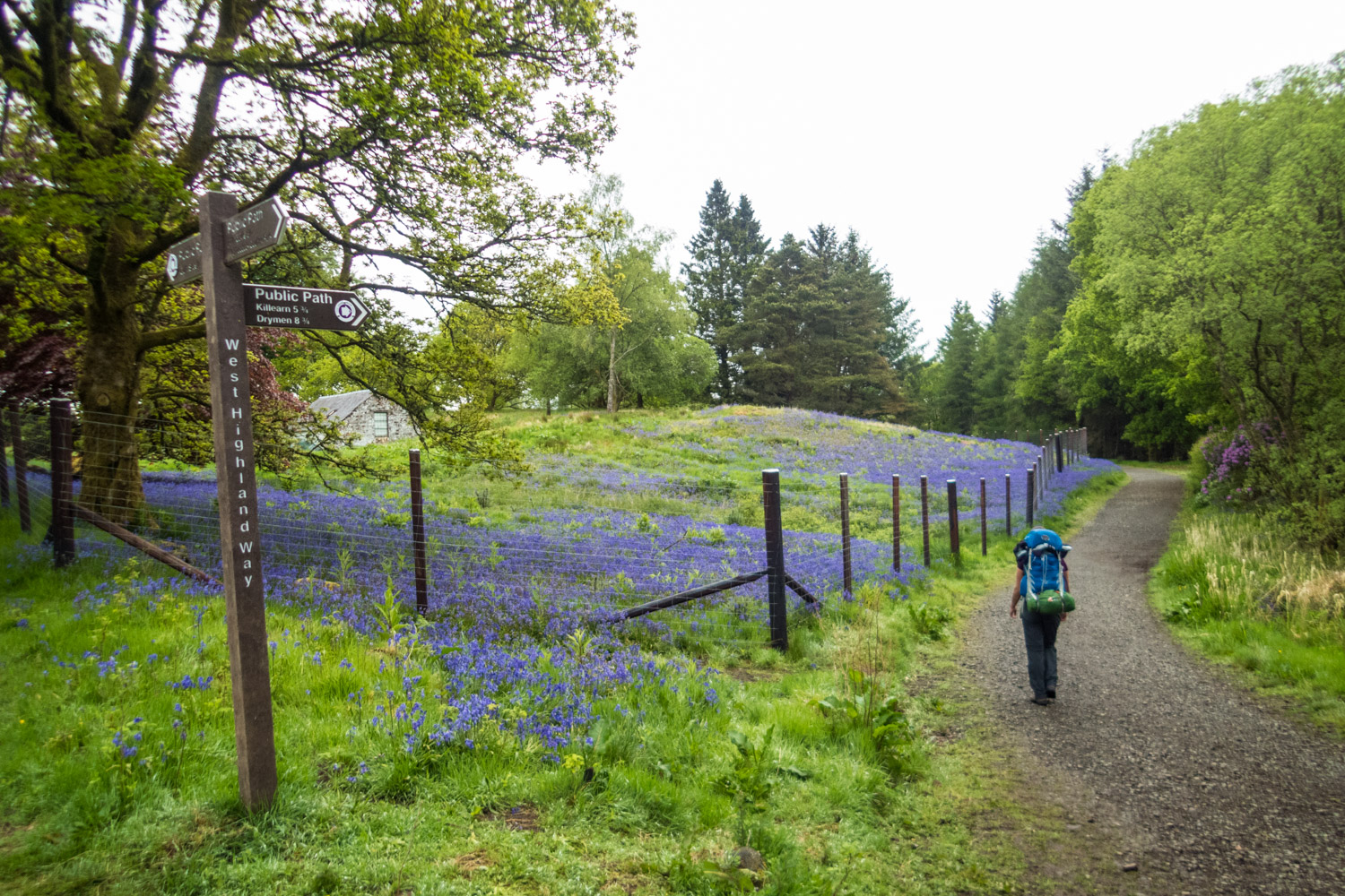 Dyan walking ahead as I stopped again to admire the bluebells.