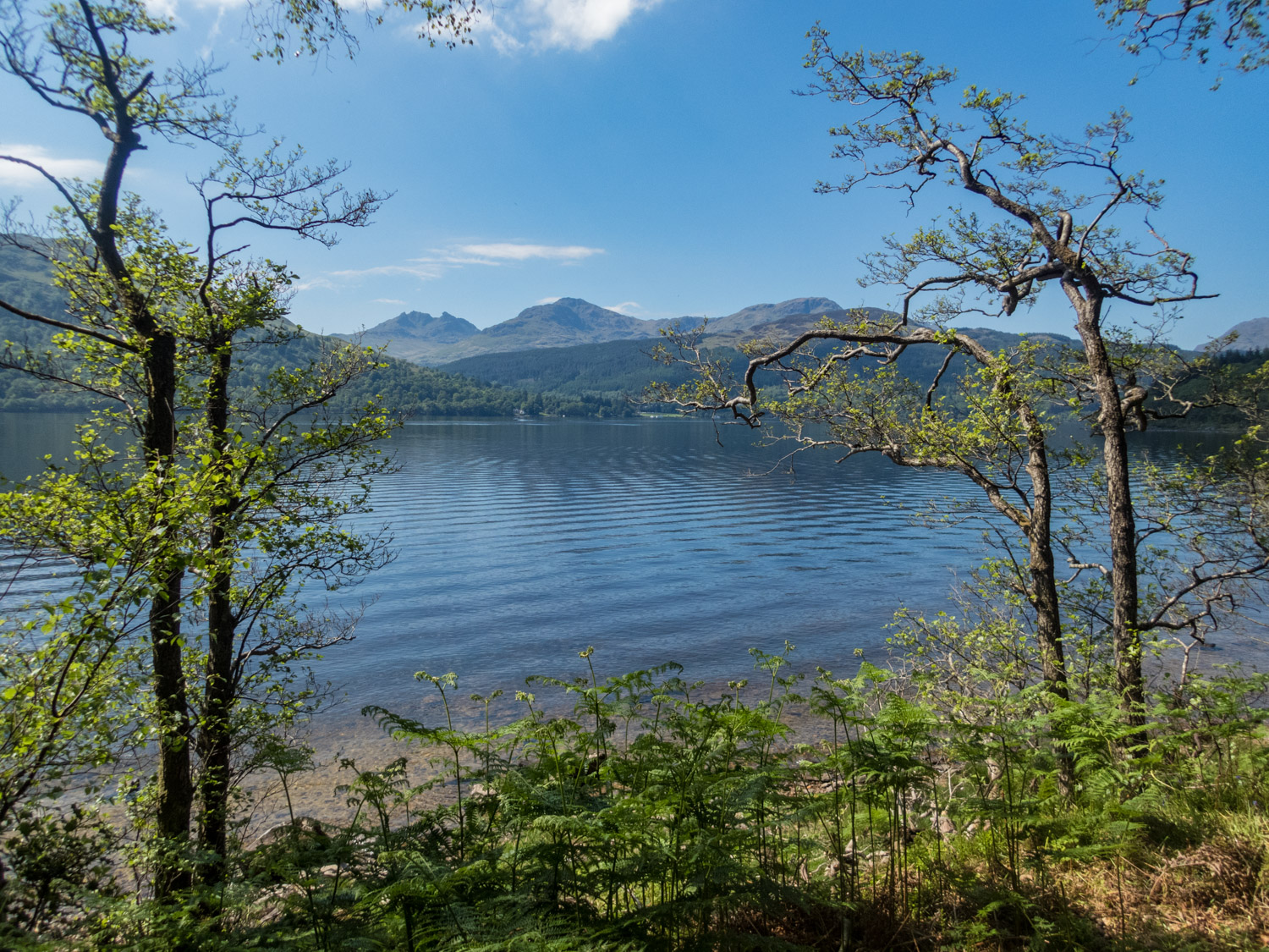 A perfect gap in the trees for a view over Loch Lomond to the Arrochar Alps with The Cobbler on the left.