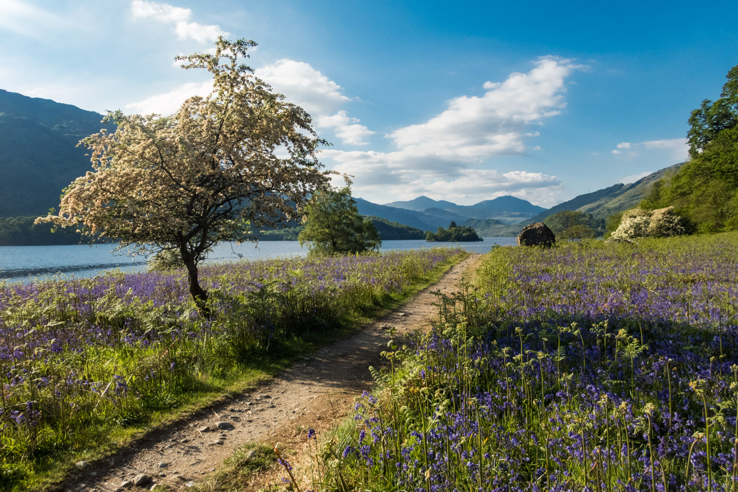 Stunning views over Loch Lomond as the path opened out to a sea of bluebells.