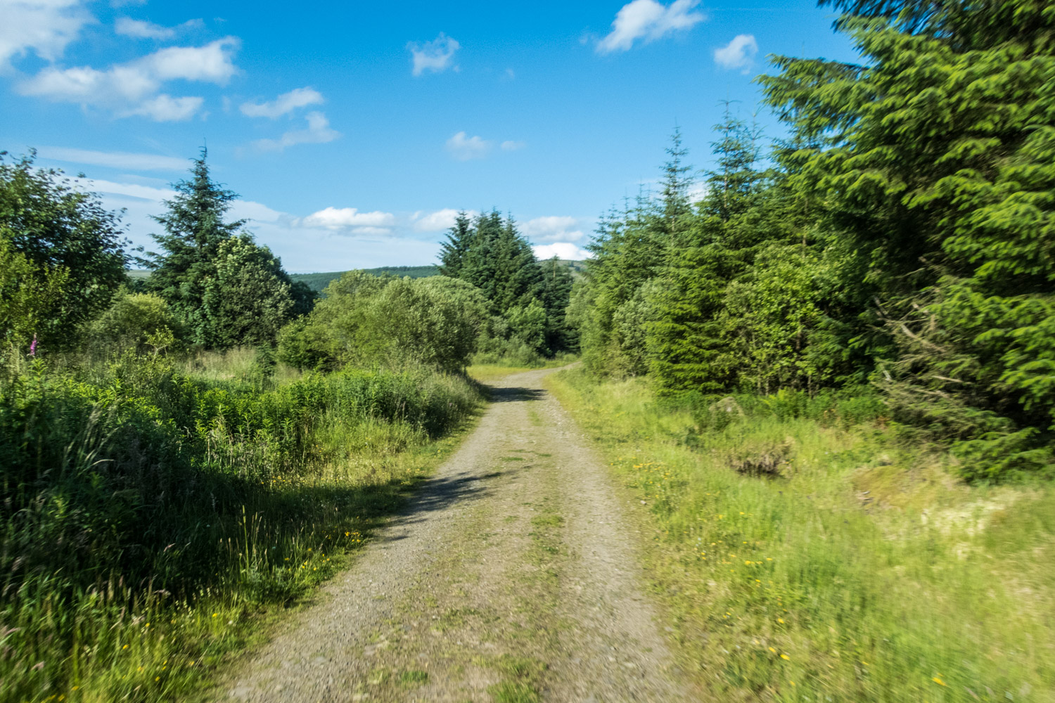 There are miles of forest tracks like this around Carron Valley.