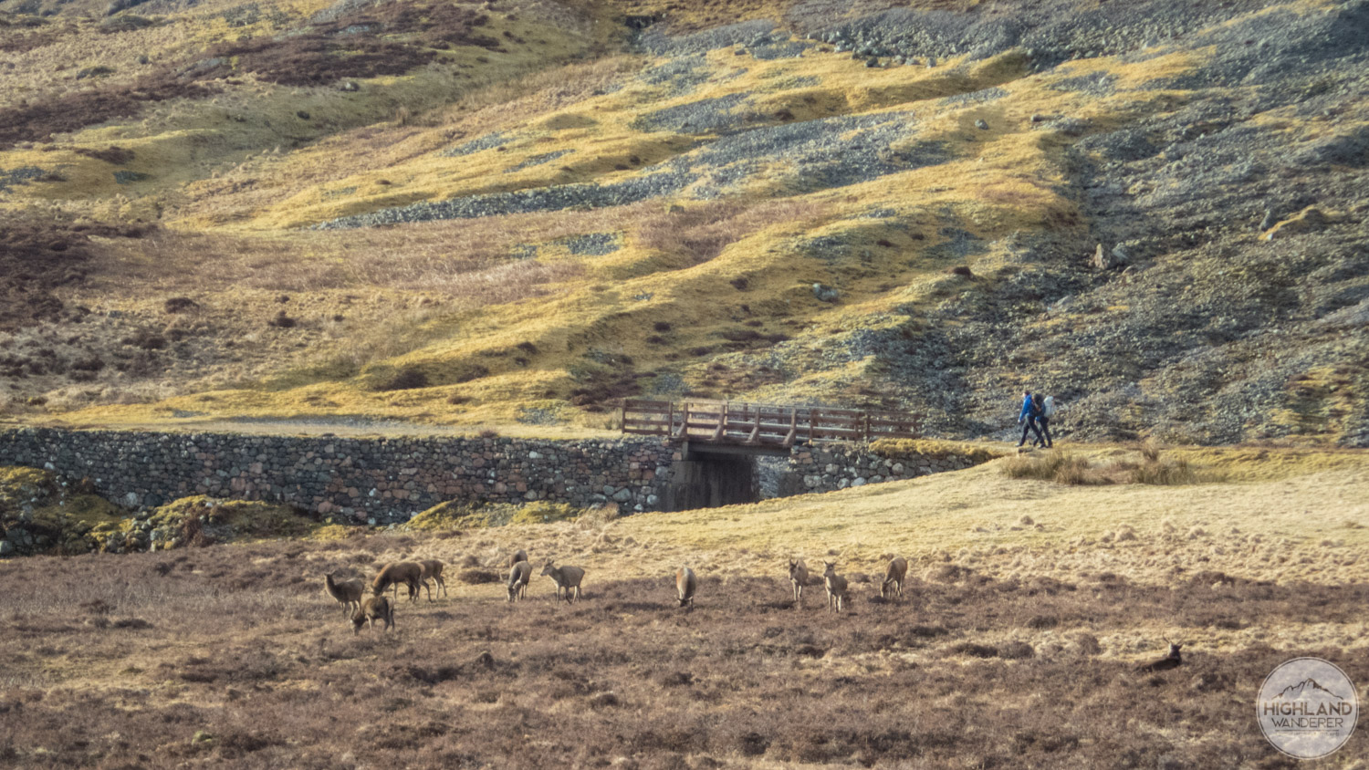 This herd of deer grazing in Glen Coe was a nice end to the day.